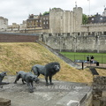 26-Londres-Tower of London-130613-01561